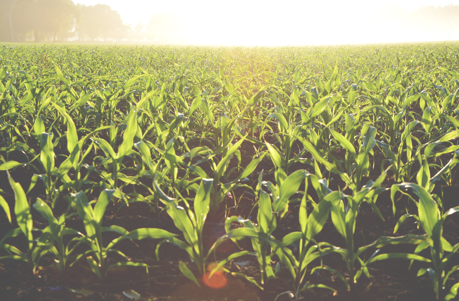 Customagintel customized rejuvenative solutions for crop for All about soil