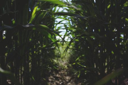 applying micronutrients crops